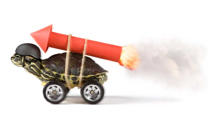 Turtle rocket launch