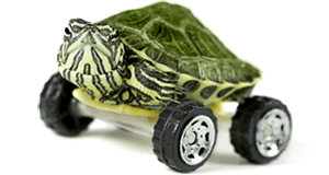 Small Turtle on wheels