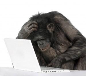 Ape at laptop